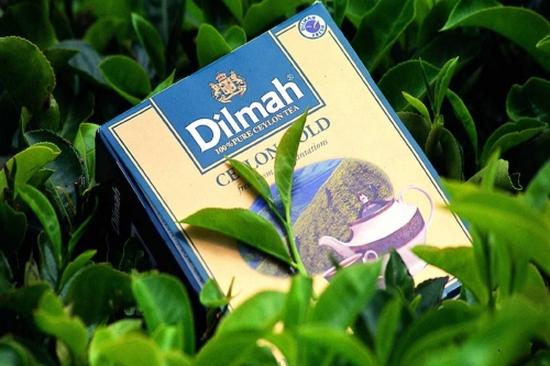 Dilmah thee catering